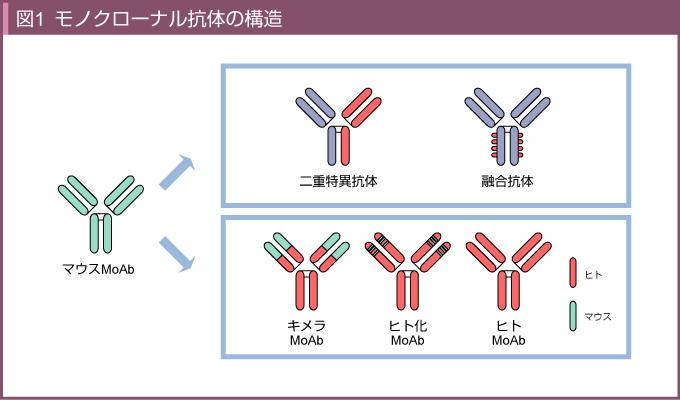 抗体 モノクロ ナール